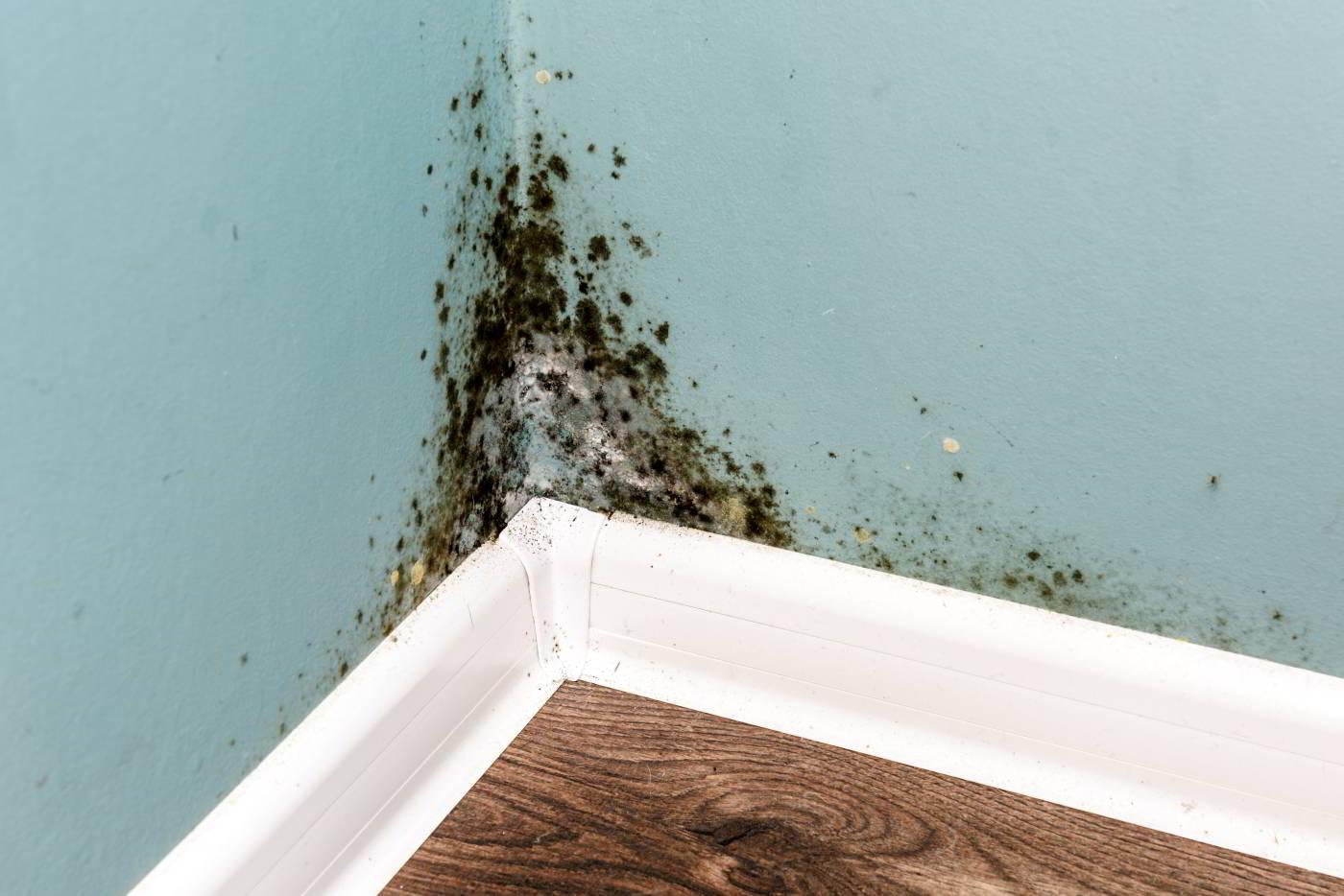 Eliminare la muffa dalle pareti con la Ventilazione Meccanica Controllata