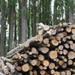 Ricavare energia dalle biomasse